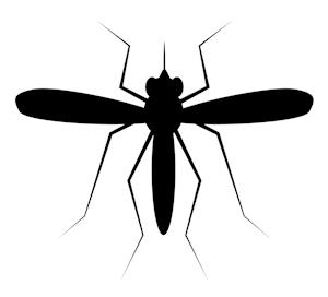 mückenstiche mücke